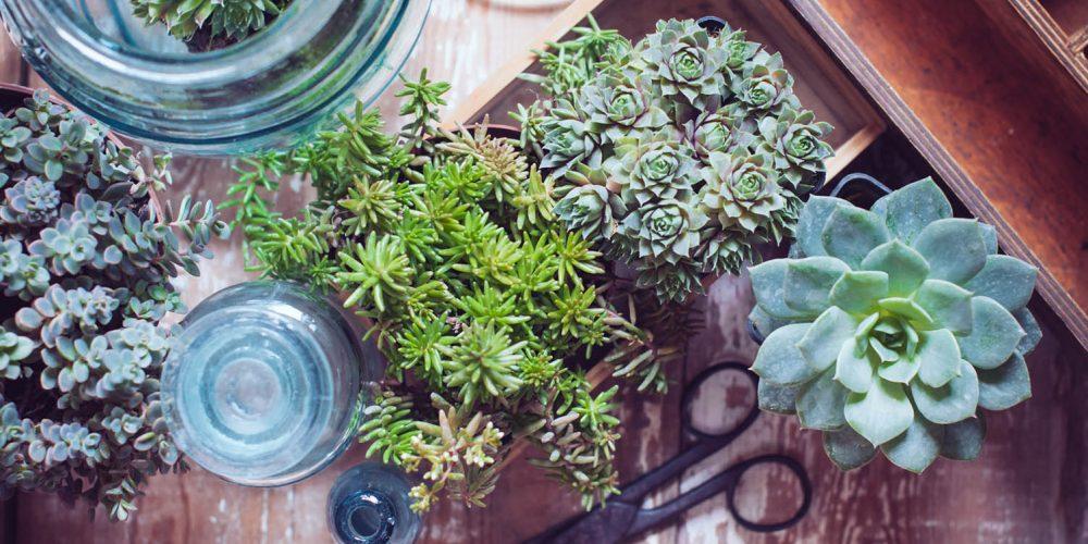 Plantas trazem vida à casa. Mas como cultivá-las em apartamento?